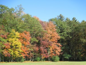 Four Seasons of Caregiving -- Fall
