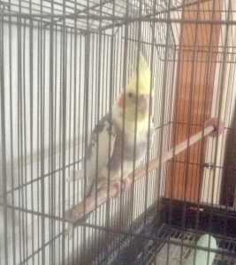 My meditation on birds and healing